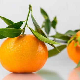 Mandarin la ghiveci - anul 2 - de vanzare